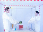Experimenting with vegtables in the sterile chamber — Stock Photo