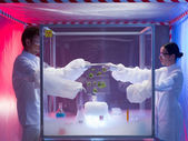 Experimenting with microorganisms in protection enclosure — Stock Photo