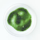 Green mold sample in a petri dish — Stock Photo