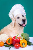 Retriever dog cooking — Stock Photo