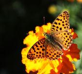 Butterfly on a flower — 图库照片