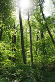 лесные деревья — Стоковое фото