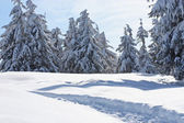 Snow-covered tree — Stock Photo