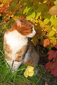 Cat in a yellow leaves — Stock Photo