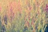 Morning on meadow — Stock fotografie