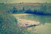 Mistico verde palude — Foto Stock
