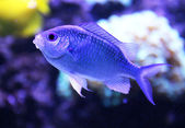 Exotische aquariumvissen — Stockfoto