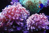 Aquarium life — Stock Photo