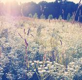 Matin sur la prairie — Photo
