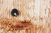 Pushpin in a wooden board. — Stock Photo