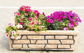 Flower in the stone flowerbed. — Stock Photo
