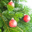 Christmas fir branch — Stock Photo #16029263