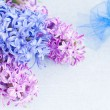 Royalty-Free Stock Photo: Hyacinths
