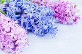 Three flowers — Stock Photo