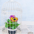 Flower in cage — Stock Photo