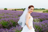Portrait of a bride in a lavender field — Stock Photo