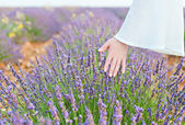 Hand and lavender — Stock Photo