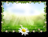 Easter spring daisy post card — Stock Photo