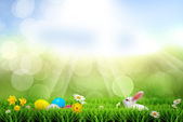 Easter spring holiday post card - soft background — Stock Photo