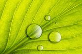 Zelený list s vodou kapky close-up pozadí. makro — Stock fotografie