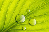 Green leaf with water drops close-up background. Macro — Stock Photo