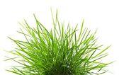 Verse lente groen gras p — Stockfoto