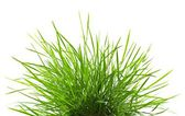 Fresh spring green grass p — Stock Photo