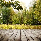 Forêt — Photo