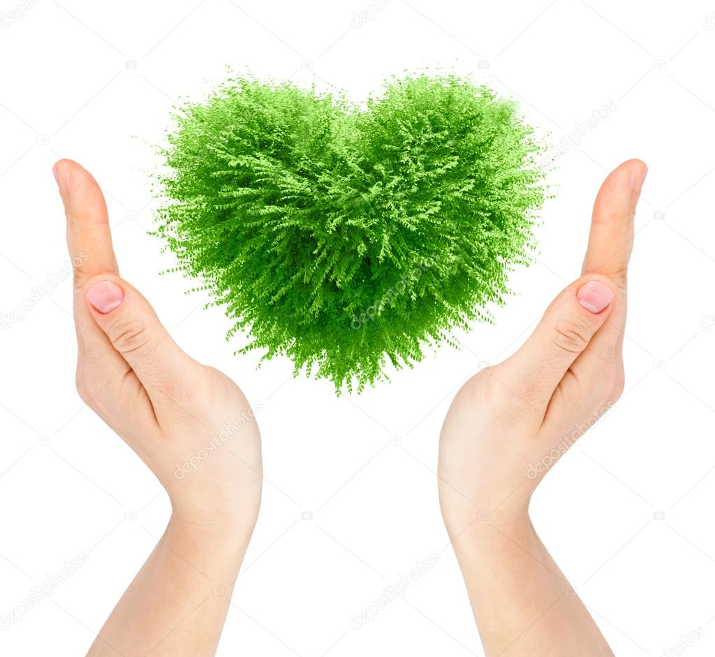 Valentine tree, love concept, heart shape leaves and hands over white background — Stock Photo #14775961