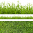 Grass — Stock Photo #15773741