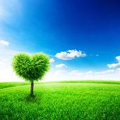 Drzewo — Zdjęcie stockowe