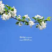 Spring — Stockfoto