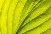 Yaprak — Stok fotoğraf