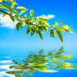 Branch with green leaves with reflecting in water over sky background — Stock Photo