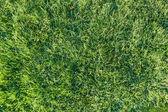 Çimen — Stok fotoğraf