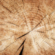Brown cross section of split tree trunk background — Stockfoto