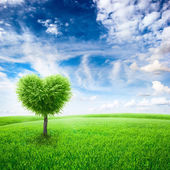 Green field with heart shape tree under blue sky — Stock Photo