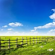 Fence in the green field — Stock Photo #39243895