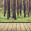 Forest background — Stock Photo