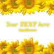 Sunflower — Stock Photo #39689181
