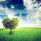 Green field with heart shape tree under blue sky. — Stock Photo