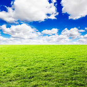 Green field under blue clouds sky — Stock Photo