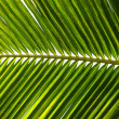Green palm leaf background — Stock Photo #44789579