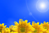 Abstract background with sunflowers — Stock Photo