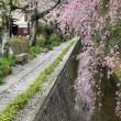 Philosopher's Walk in Kyoto — Stock Photo