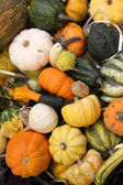 Squash varieties — Stock Photo