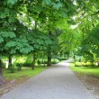 Kalisz park — Stock Photo