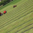 Mowing grass — Foto de Stock