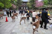 Nara — Foto Stock