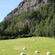Agriculture in Norway — Stock fotografie